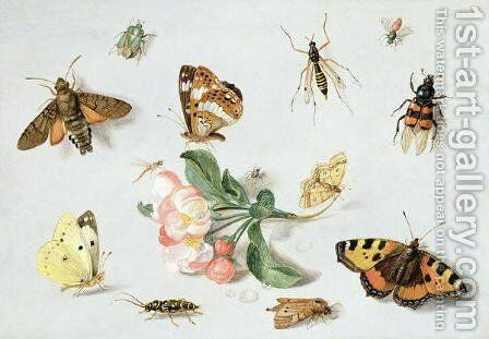 Butterflies moths and other insects with a sprig of apple blossom by Jan van Kessel - Reproduction Oil Painting