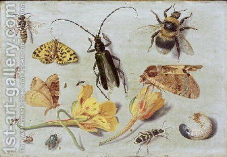 Insects 5 by Jan van Kessel - Reproduction Oil Painting