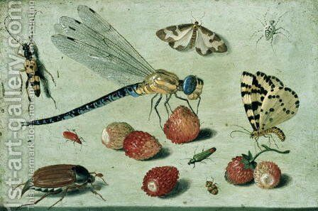 Study of Insects Butterflies and Flowers by Jan van Kessel - Reproduction Oil Painting