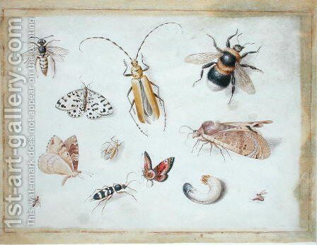 A Study of Butterflies and other Insects by Jan van Kessel - Reproduction Oil Painting
