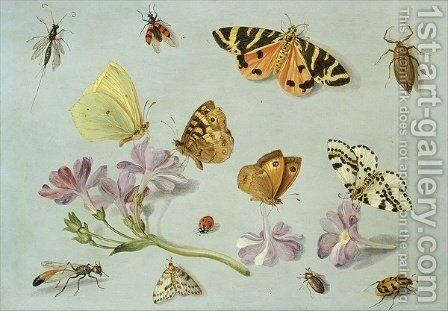 Butterflies moths and other insects with a sprig of periwinkle by Jan van Kessel - Reproduction Oil Painting