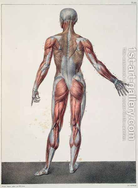Anatomy of the human body by (after) Jacob, Nicolas Henri - Reproduction Oil Painting