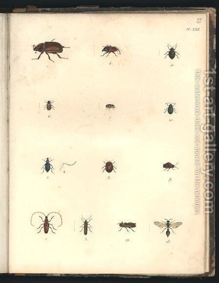 Beetles and Wasps by Baron Friedrich von Humboldt - Reproduction Oil Painting