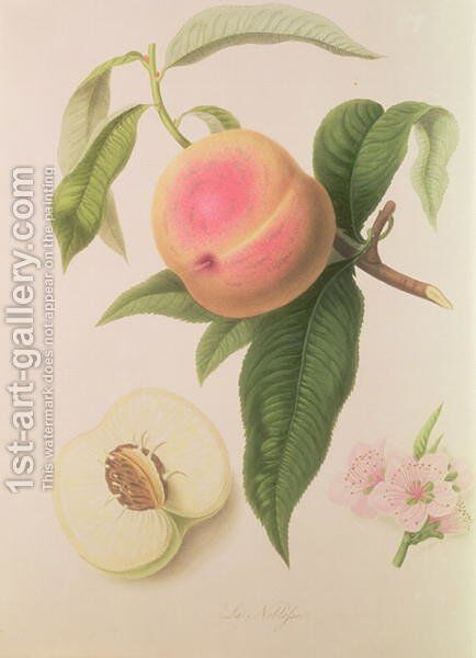 Noblesse Peach by William Hooker - Reproduction Oil Painting