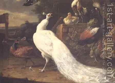 The White Peacock by Melchior de Hondecoeter - Reproduction Oil Painting