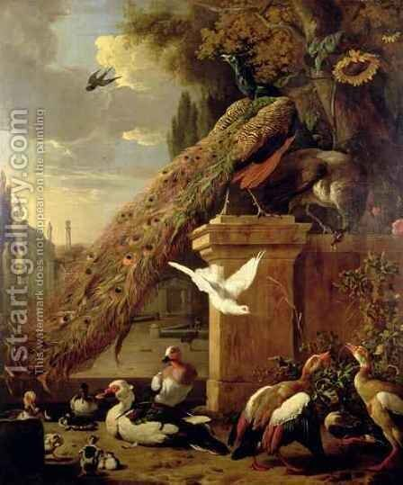 Peacocks and Ducks by Melchior de Hondecoeter - Reproduction Oil Painting