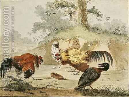 Cocks Fighting by Melchior de Hondecoeter - Reproduction Oil Painting