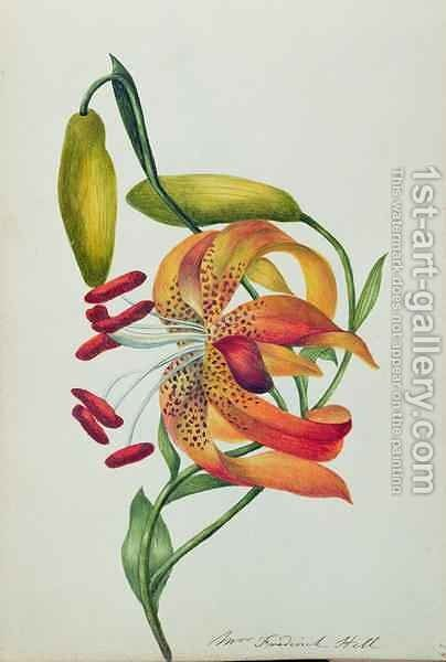 Tiger Lily by Mrs Frederick Hill - Reproduction Oil Painting