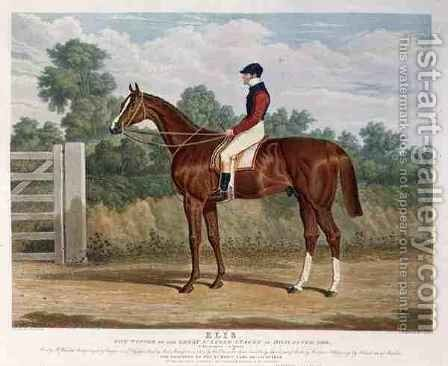 Elis the Winner of the Great St Leger Stakes at Doncaster by (after) Herring Snr, John Frederick - Reproduction Oil Painting