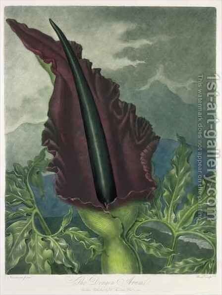 The Dragon Arum by (after) Henderson, Peter Charles - Reproduction Oil Painting