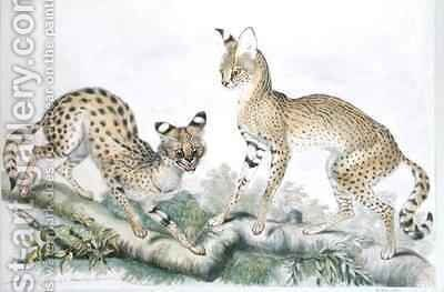 Felis Servalina from The Knowsley Menagerie by Benjamin Waterhouse Hawkins - Reproduction Oil Painting