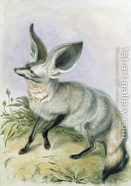 Long Eared Fox from the Knowsley Menagerie by Benjamin Waterhouse Hawkins - Reproduction Oil Painting