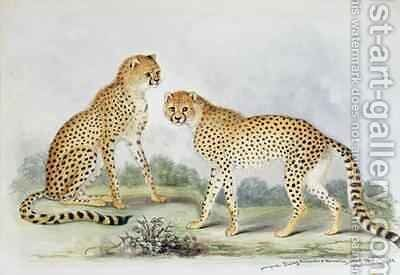 A Pair of Cheetahs from The Knowsley Menagerie by Benjamin Waterhouse Hawkins - Reproduction Oil Painting