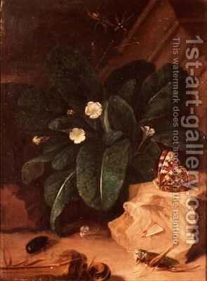 Still Life with Primroses and Insects by Carl Wilhelm de Hamilton - Reproduction Oil Painting