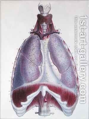 Anatomy of the lungs from Manuel dAnatomie descriptive du Corps Humain by (after) Haincelin - Reproduction Oil Painting