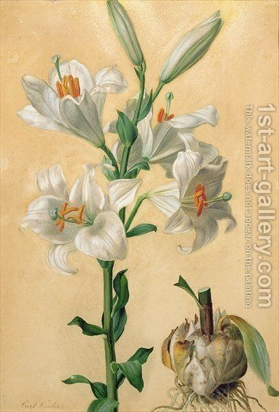 White Lily Amaryllis Candidum by Carl Franz Gruber - Reproduction Oil Painting