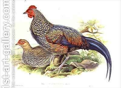 Two Asian pheasants Gallus Sonneratii by (after) Gould, John - Reproduction Oil Painting