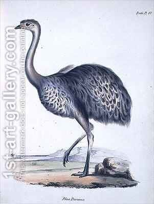 Rhea darwinii by (after) Gould, John - Reproduction Oil Painting