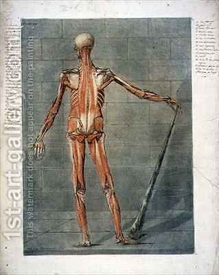 Deeper Muscular System of the Back of the Body by Arnauld Eloi Gautier DAgoty - Reproduction Oil Painting