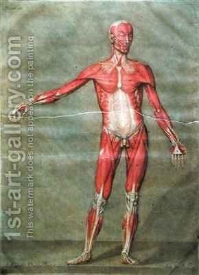 Superficial Muscular System of the Back of the Body by Arnauld Eloi Gautier DAgoty - Reproduction Oil Painting