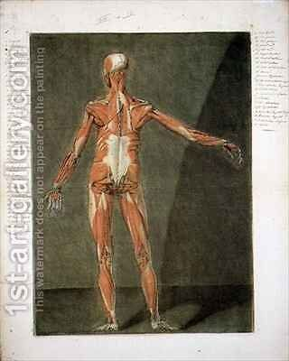 Superficial Muscular System of the Back of the Body 2 by Arnauld Eloi Gautier DAgoty - Reproduction Oil Painting
