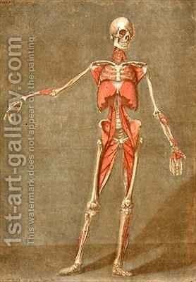 Deep Muscular System of the Front of the Body by Arnauld Eloi Gautier DAgoty - Reproduction Oil Painting