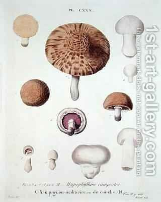 Hypophyllum campestre or the field mushroom by (after) Fossier - Reproduction Oil Painting