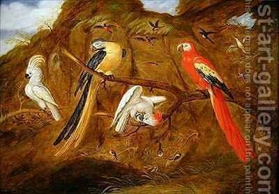 A scarlet blue and gold macaw with cockatoos and other birds in a landscape by Jan Baptist van Fornenburgh - Reproduction Oil Painting