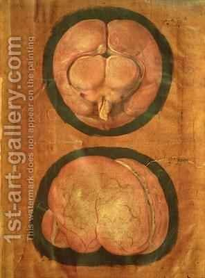 Anatomical drawing of the human brain by Hieronymus Fabricius ab Aquapendente - Reproduction Oil Painting