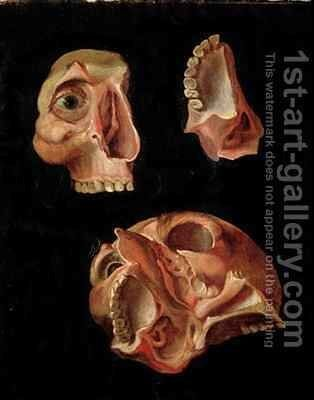Anatomical drawing showing the bones of the cranium by Hieronymus Fabricius ab Aquapendente - Reproduction Oil Painting
