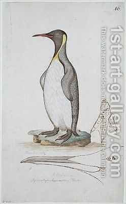 f46 King Penguin Aptenodytes patagonicus by William Ellis - Reproduction Oil Painting