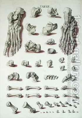 Bones of the foot from Tabulae Osteologicae by (after) Eisenberger, Nikolaus Friedrich - Reproduction Oil Painting