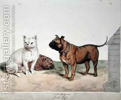 The Bull Dog by Sydenham Teast Edwards - Reproduction Oil Painting