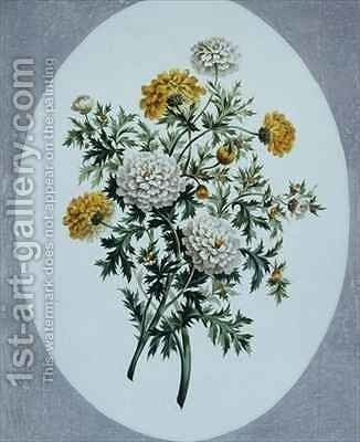 Chrysanthemum by John Edwards - Reproduction Oil Painting