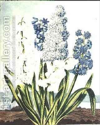 Hyacinths by (after) Edwards, J. - Reproduction Oil Painting