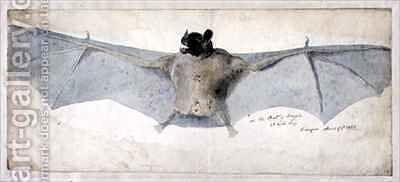 The Bat of Brazils by Augustus Earle - Reproduction Oil Painting