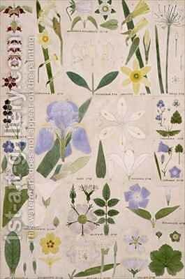 Botanical illustration by Christopher Dresser - Reproduction Oil Painting