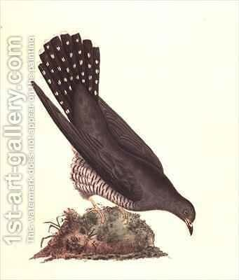 Cuckoo from The History of British Birds by Edward Donovan - Reproduction Oil Painting