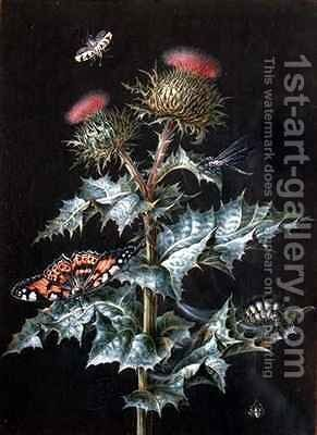 A Study of a Thistle with Insects by Barbara Regina Dietzsch - Reproduction Oil Painting
