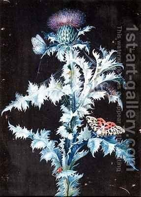 Still Life of a Thistle by Barbara Regina Dietzsch - Reproduction Oil Painting