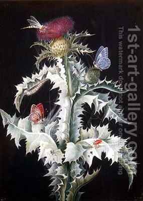 A Study of a Thistle with Insects 2 by Barbara Regina Dietzsch - Reproduction Oil Painting