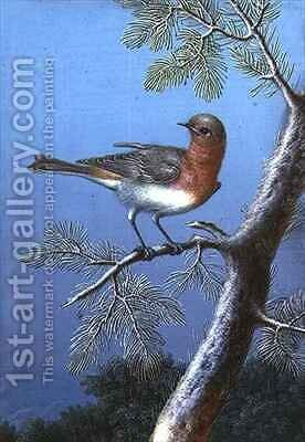 Robin Standing on a Branch by Barbara Regina Dietzsch - Reproduction Oil Painting