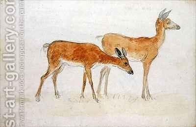American Deer by Anthony Devis - Reproduction Oil Painting