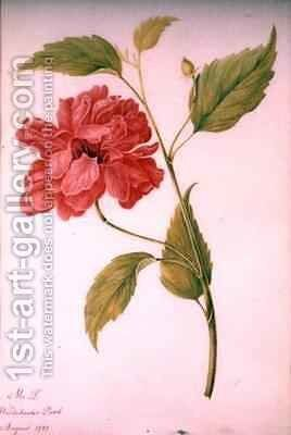 Peony Style Flower by Mary Granville Delany - Reproduction Oil Painting