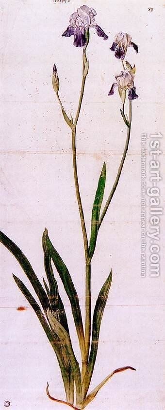Iris 2 by Albrecht Durer - Reproduction Oil Painting