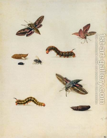 Insects by Herman Henstenburgh - Reproduction Oil Painting