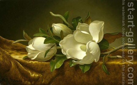 Magnolias on Gold Velvet Cloth 1888 by Martin Johnson Heade - Reproduction Oil Painting