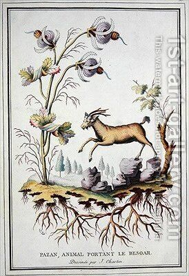 A Pazan wild mountain goat that carries in its stomach a bezoar by (after) Charton, J. - Reproduction Oil Painting
