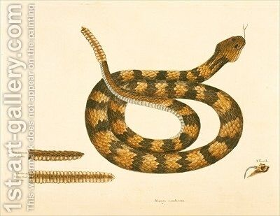 Viper Caudison Snake Rattlesnake by Mark Catesby - Reproduction Oil Painting