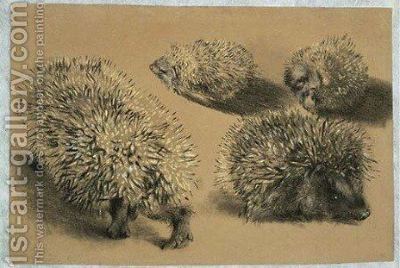 Four studies of a hedgehog by Adolph von Menzel - Reproduction Oil Painting